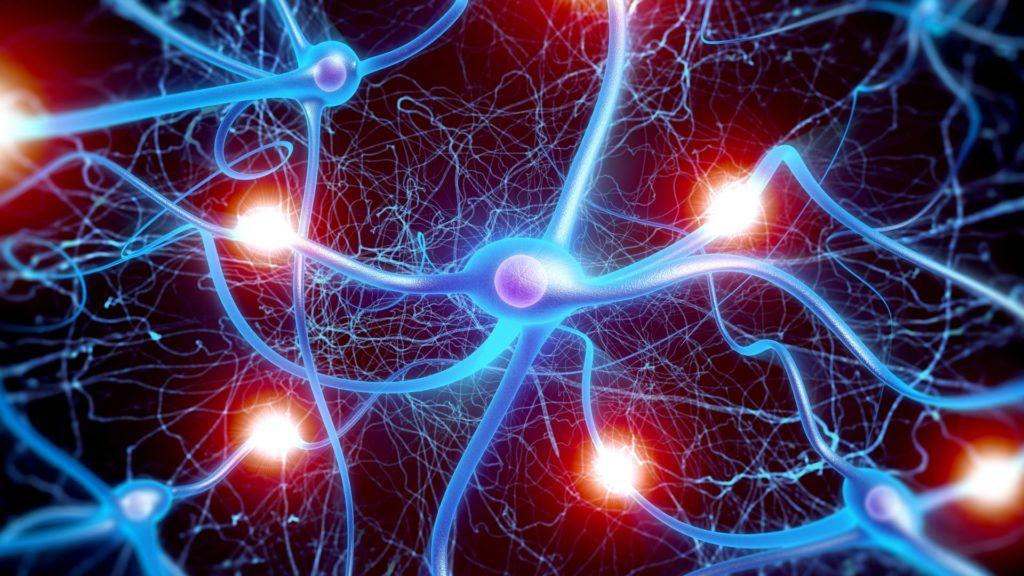 Neurones, cerveau, cellules gliales, réseau, circuit, neuronal, Bruce Lipton, Ascension Succès