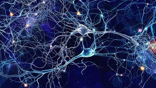 Il semblerait que les jongleurs aient un plus gros cerveau et qu'ils créent plus de substance blanche que le reste de la population.